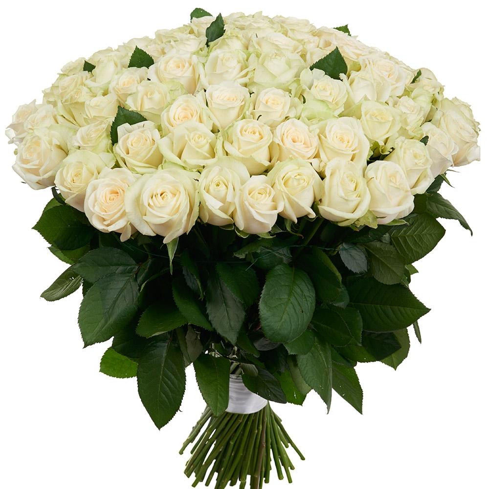 Большие белые розы картинки
